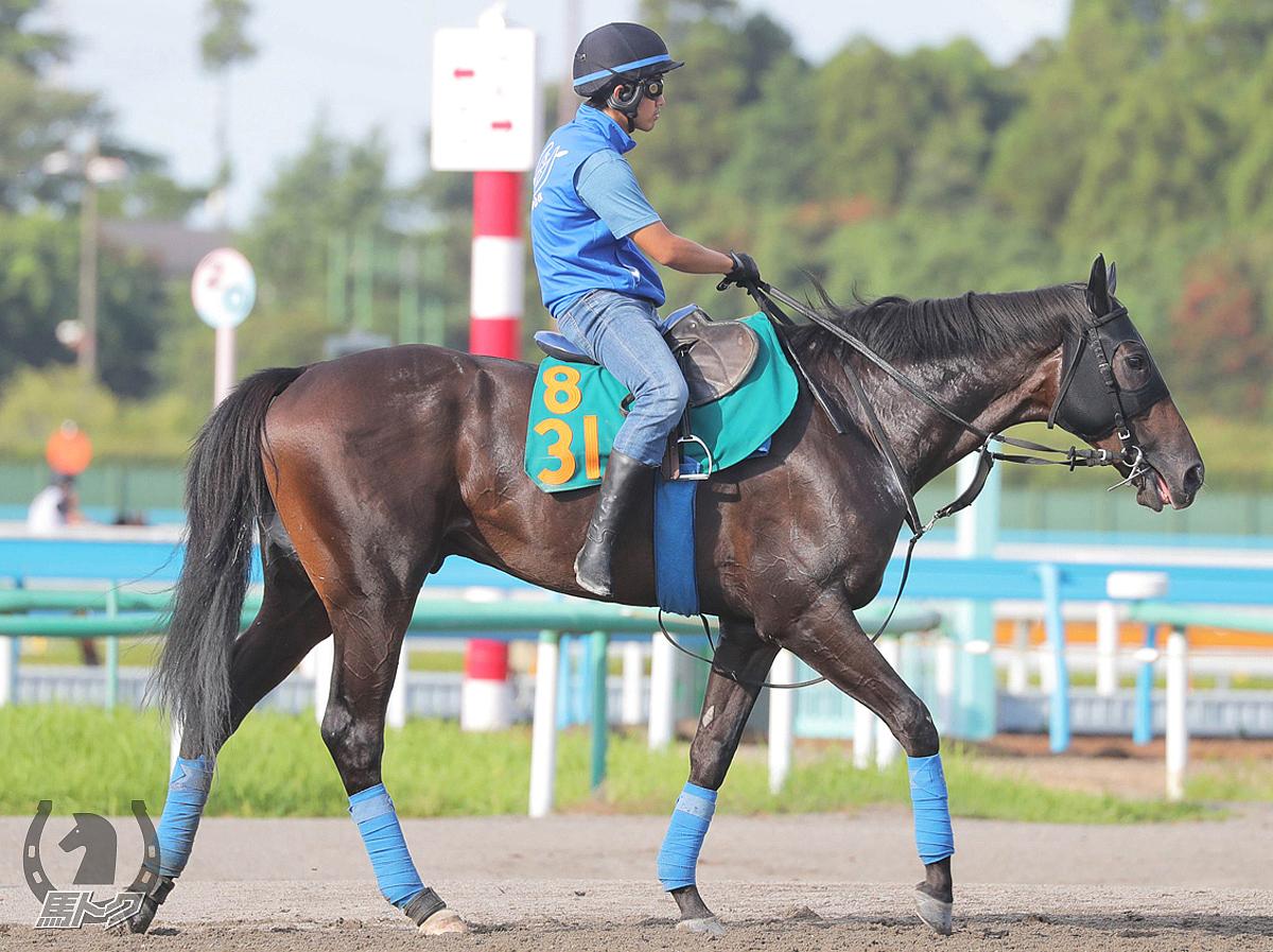フォーグッドの馬体写真