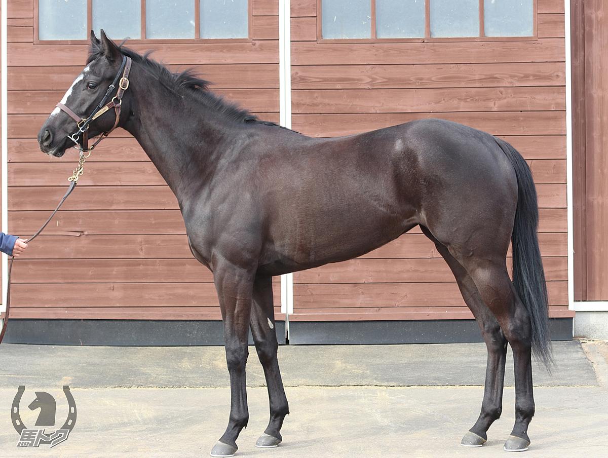 スマイルバックの馬体写真