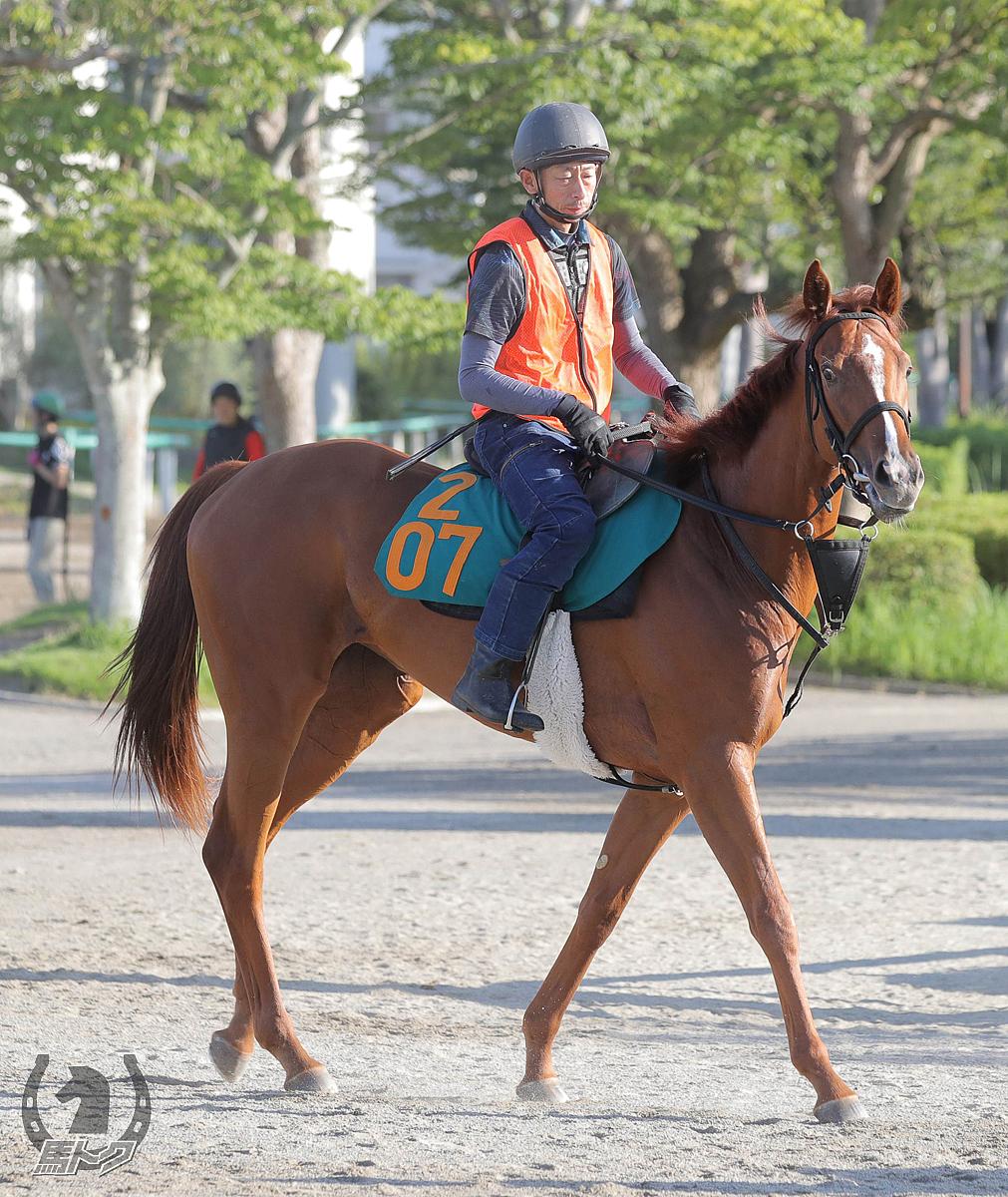 スノーグレースの馬体写真