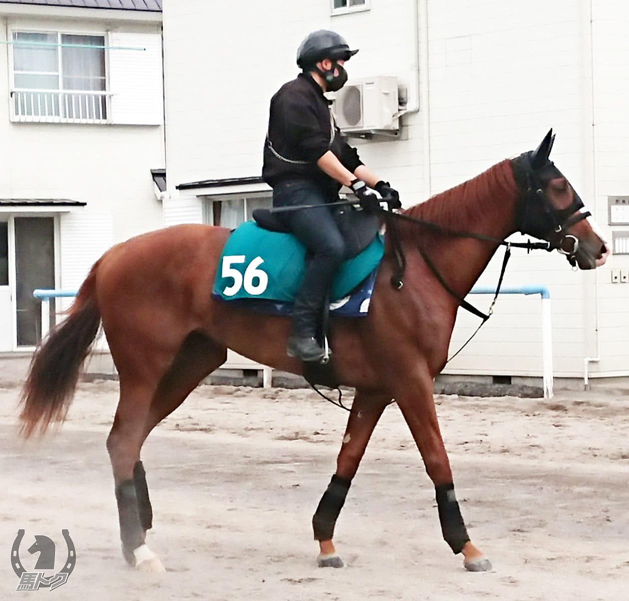 ロジマギーゴーの馬体写真