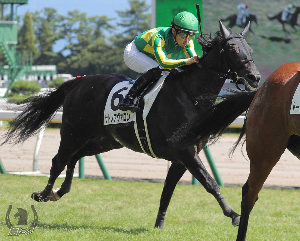サトノアヴァロンの馬体写真