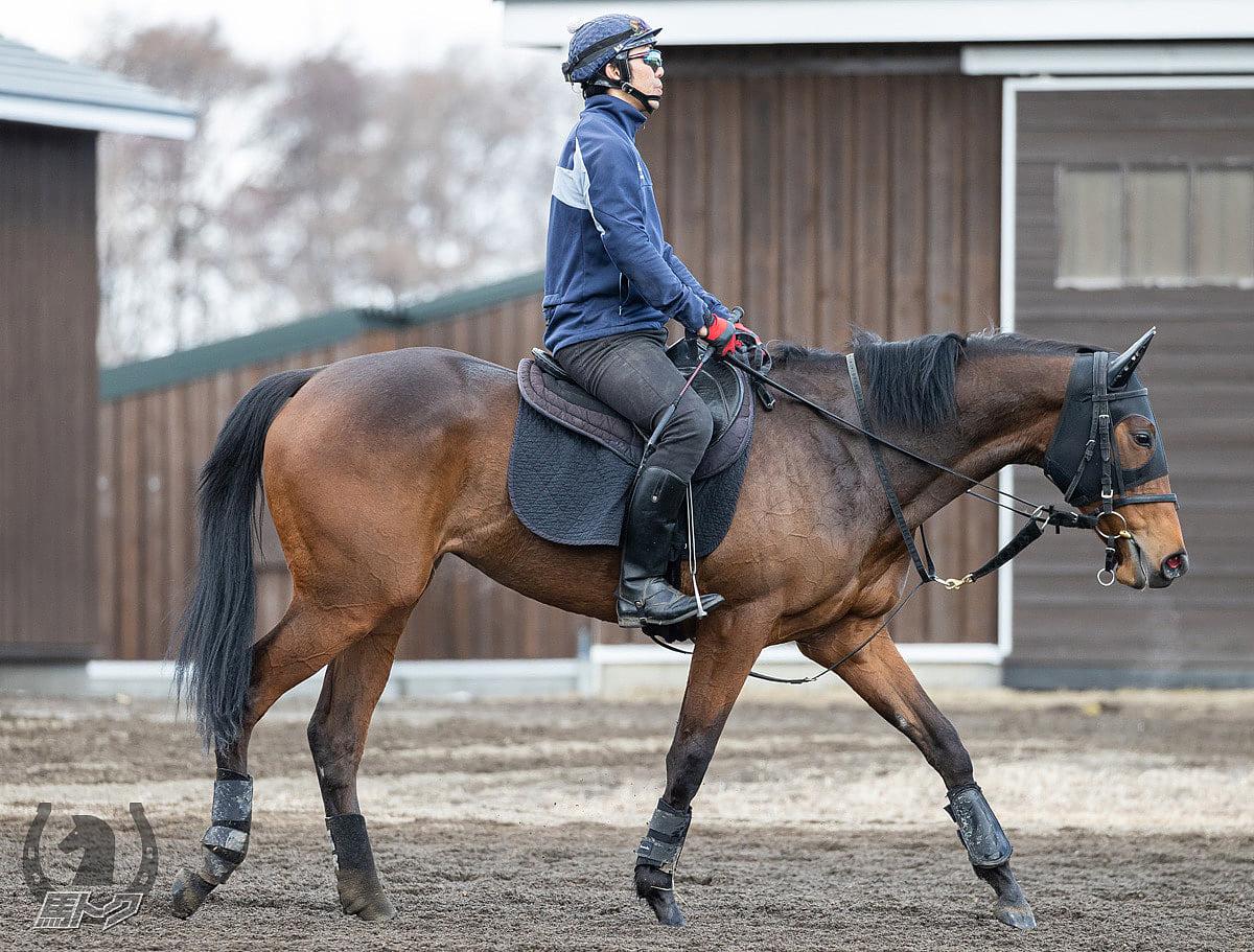 サリエラの馬体写真