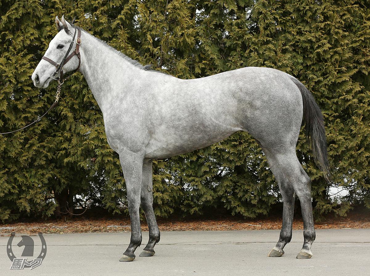 サラビの馬体写真