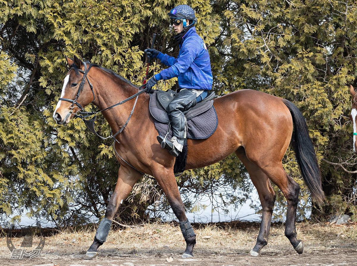 チャレンジャーの馬体写真