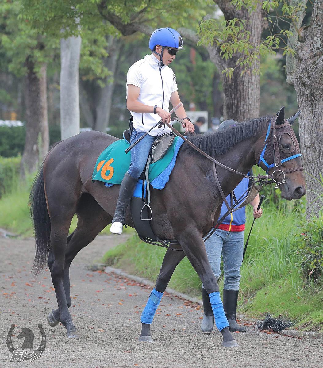 スマイルオンミーの馬体写真