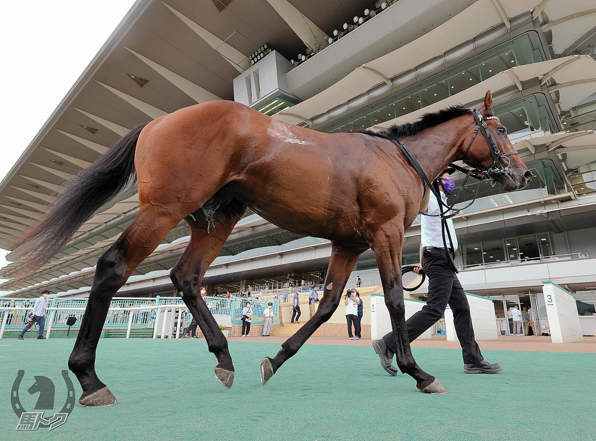 ドウデュースの馬体写真