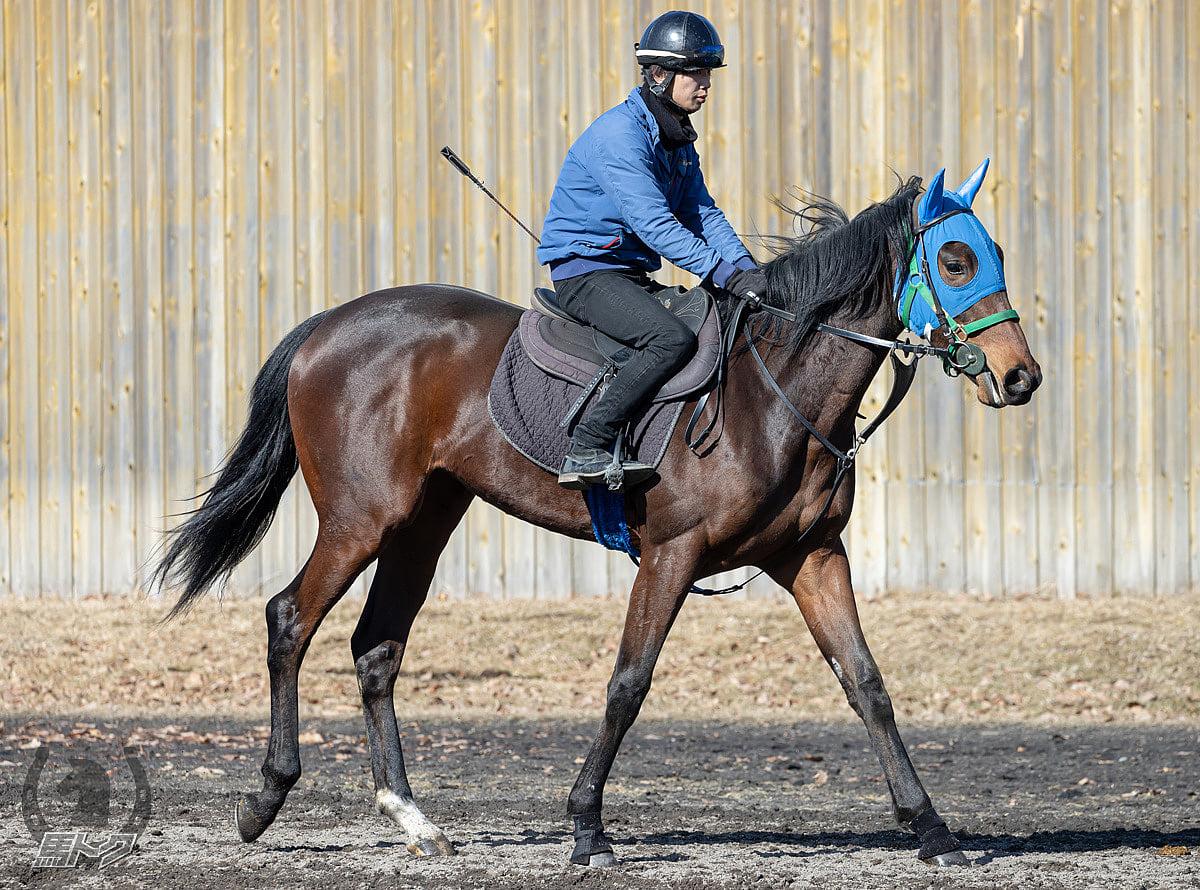 サンドレスの馬体写真