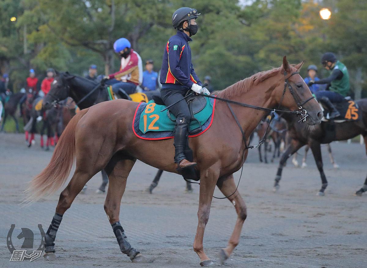 トゥザヒロインの馬体写真