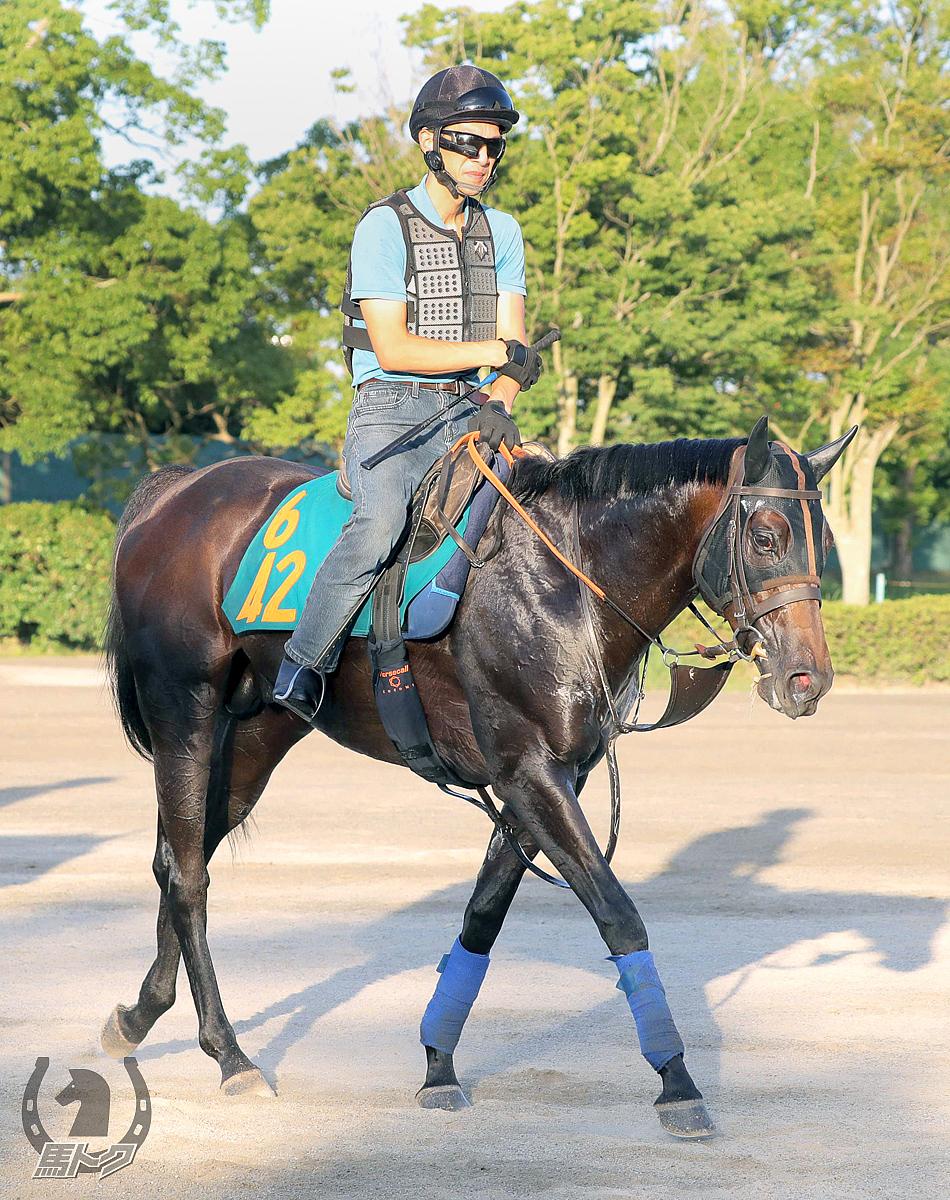 レヴァンジルの馬体写真