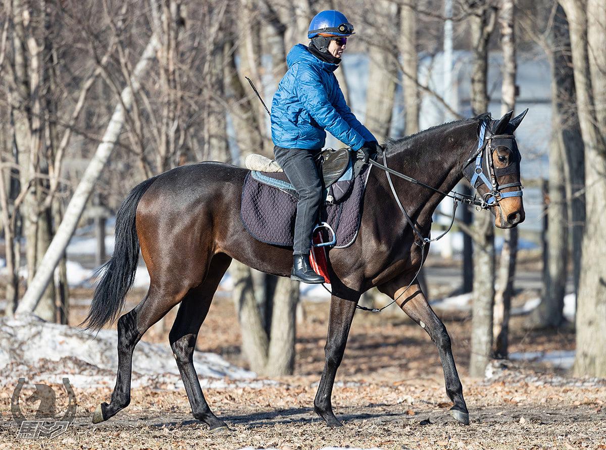 サンカルパの馬体写真
