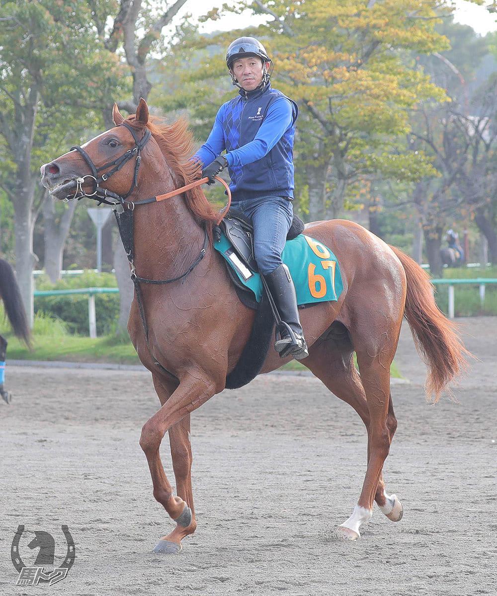 ライリッズの馬体写真