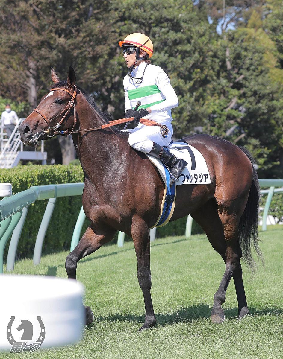 ファンタジアの馬体写真