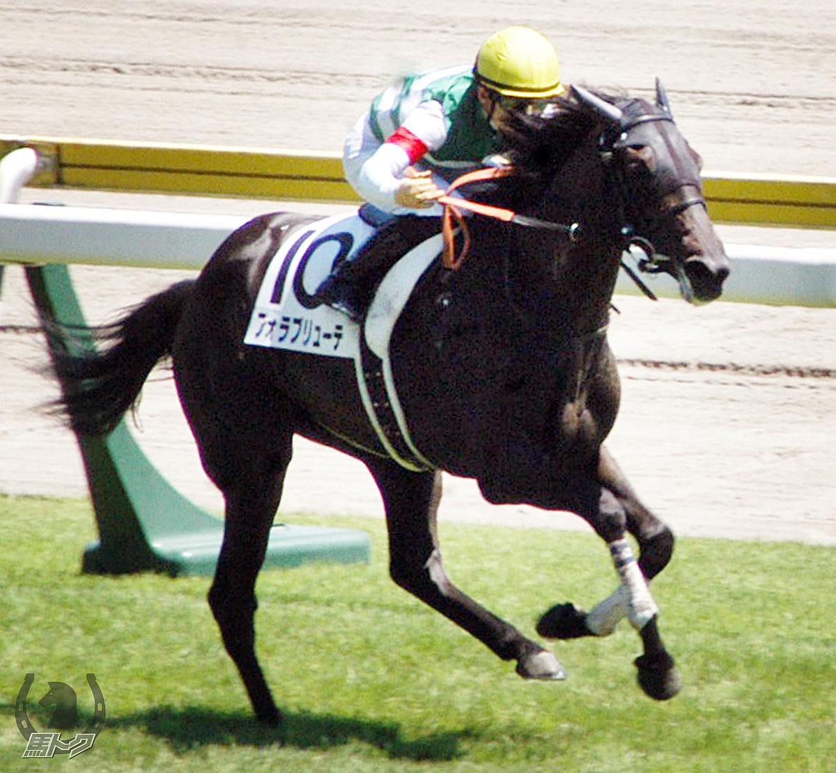 フォラブリューテの馬体写真