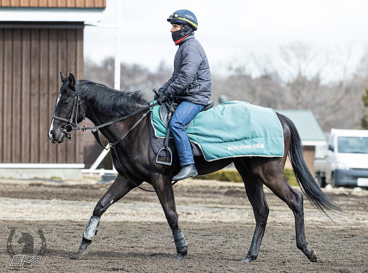 アルファカリーナの馬体写真