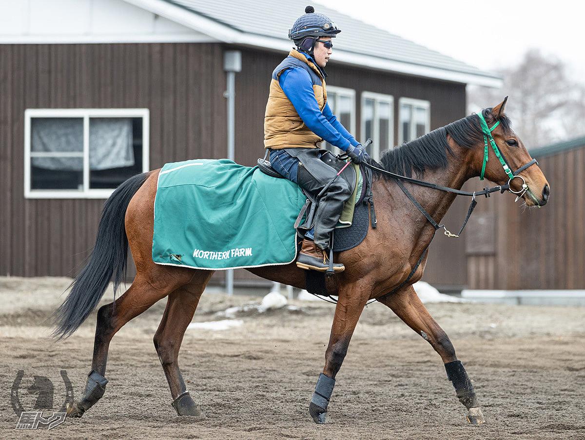 ボルダーズビーチの馬体写真