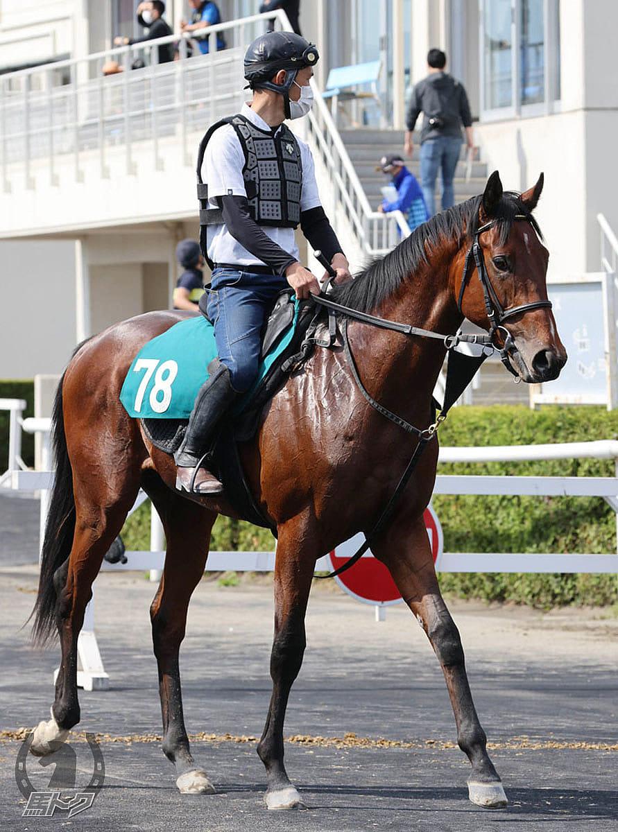 グットディールの馬体写真