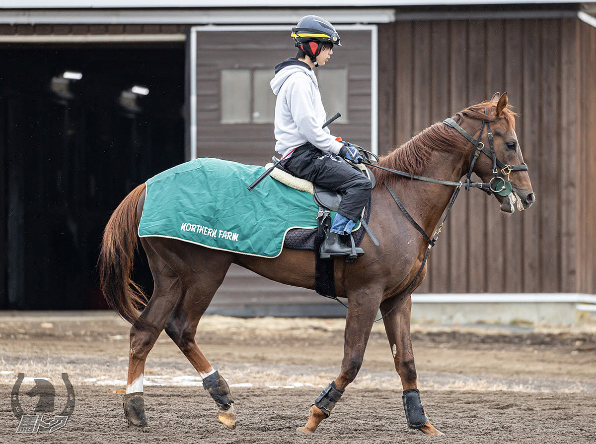 ソリダリティの馬体写真