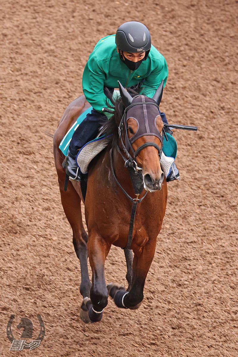 レッドバロッサの馬体写真