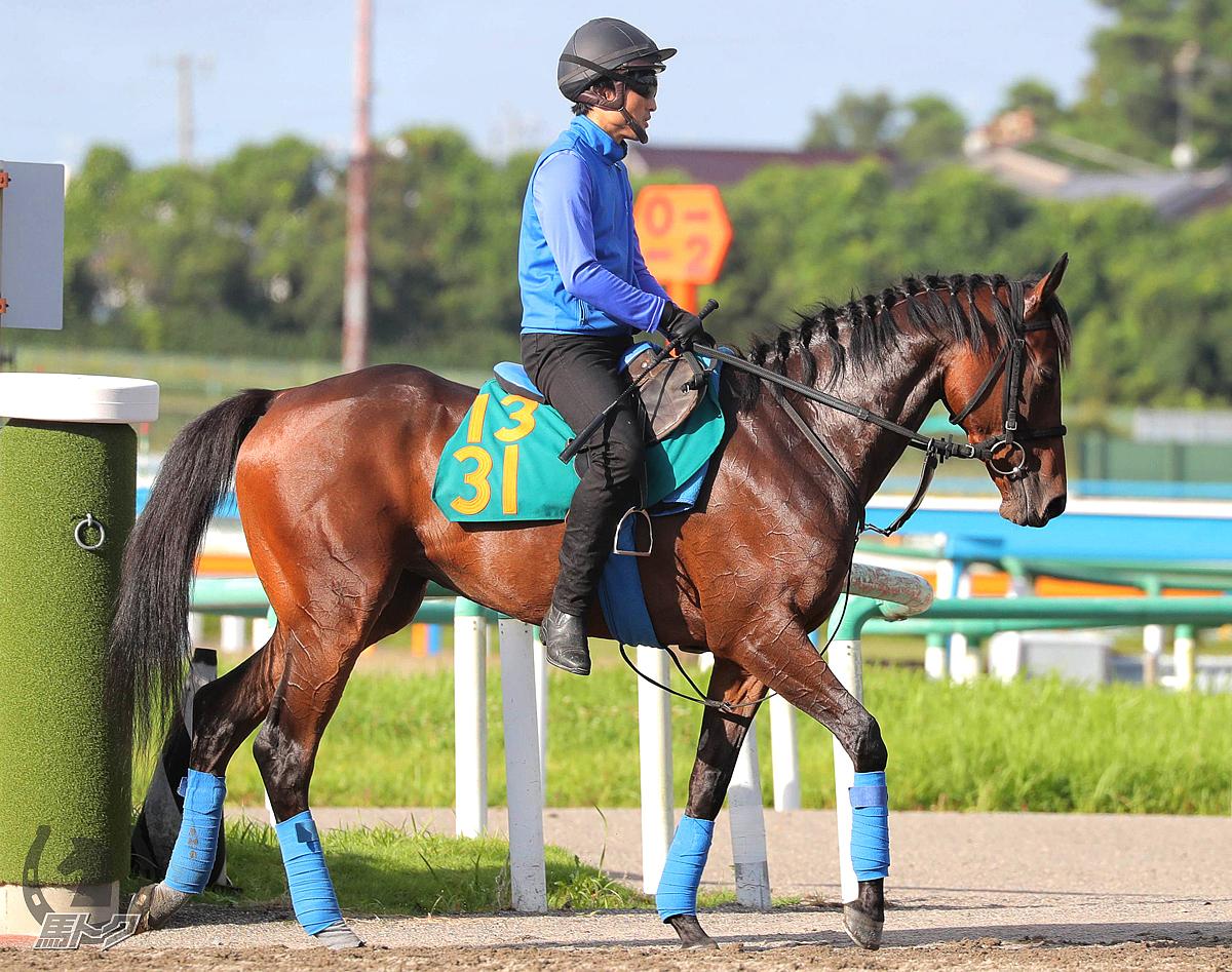 ロムネヤの馬体写真