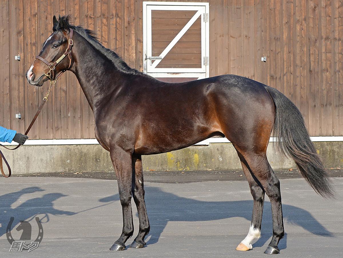 リューベックの馬体写真