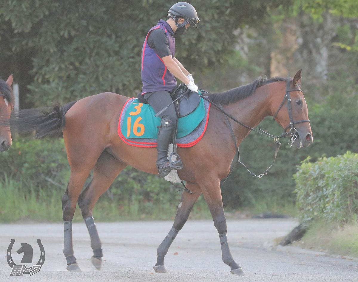 ステルナティーアの馬体写真