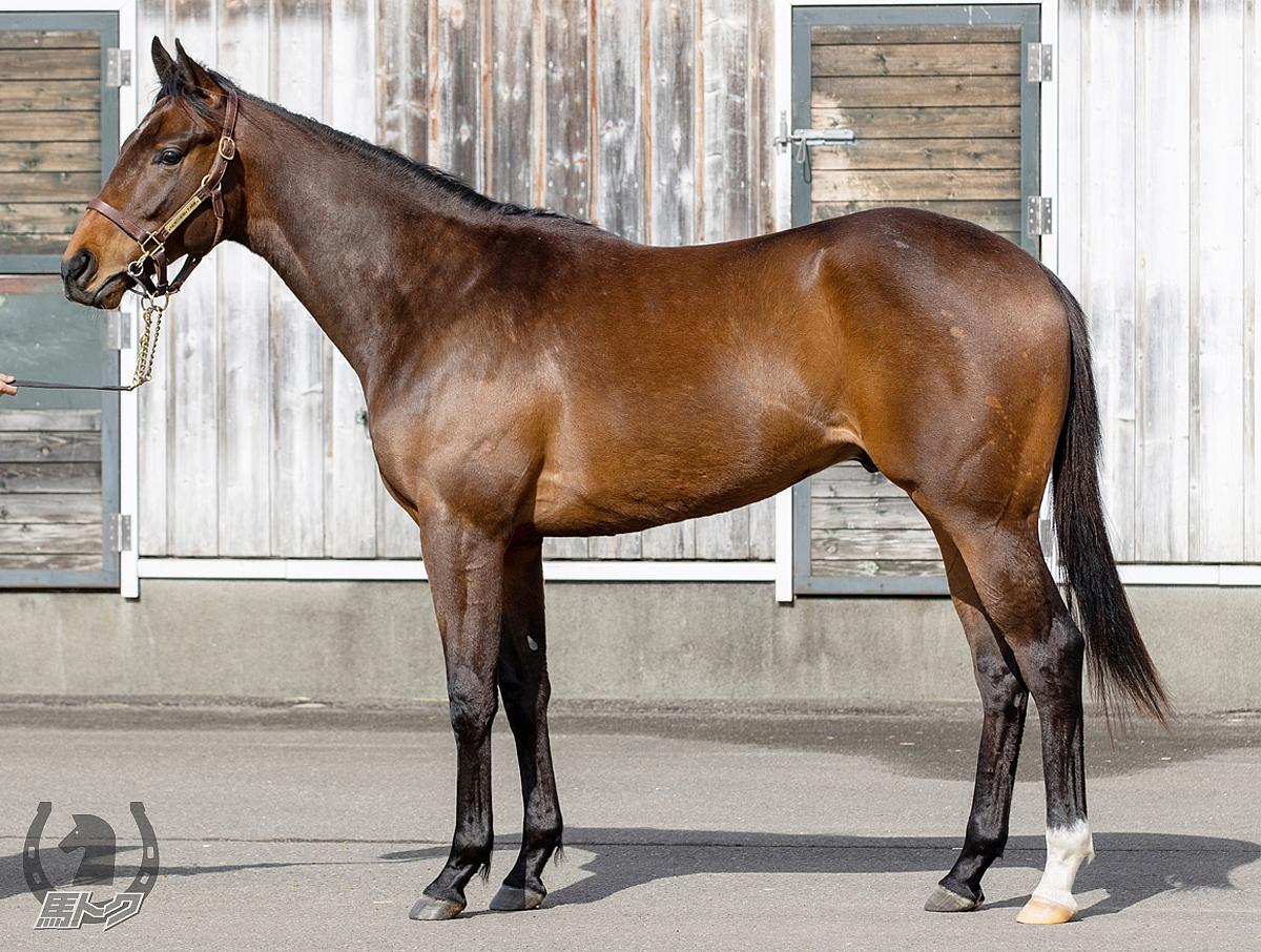 レッドマグノリアの馬体写真