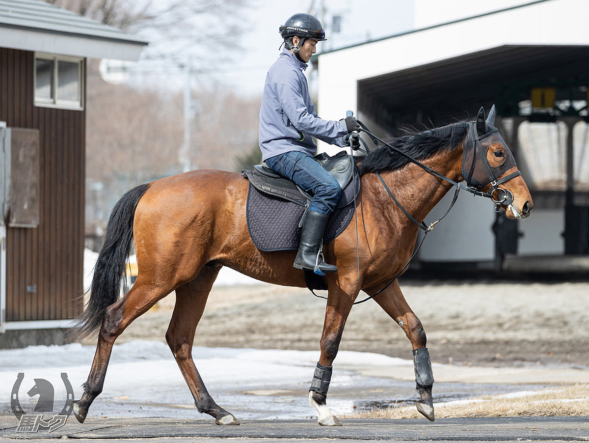 クラシックステップの馬体写真