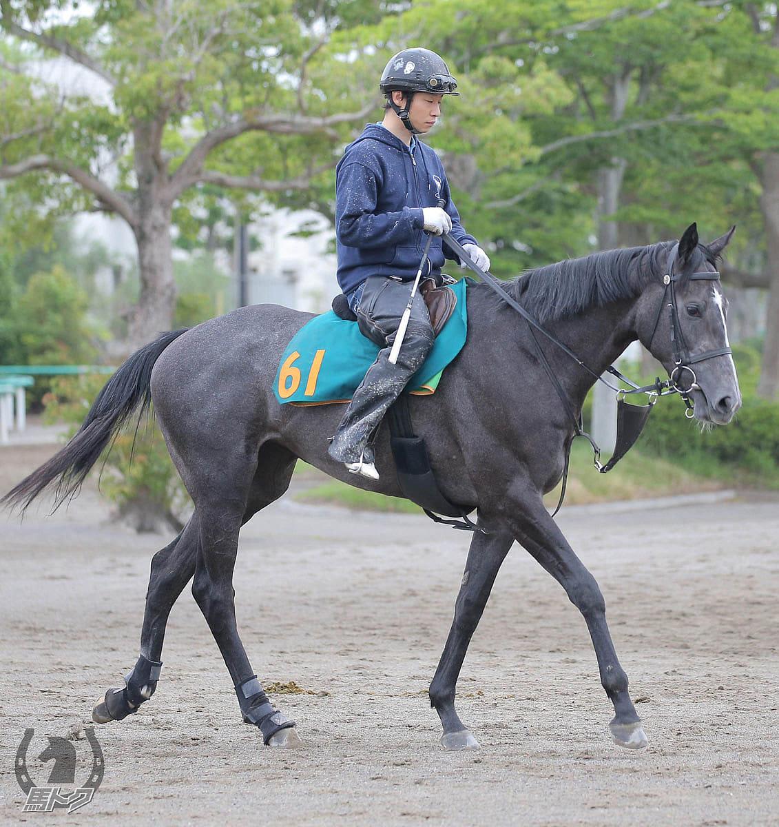 レディナビゲーターの馬体写真