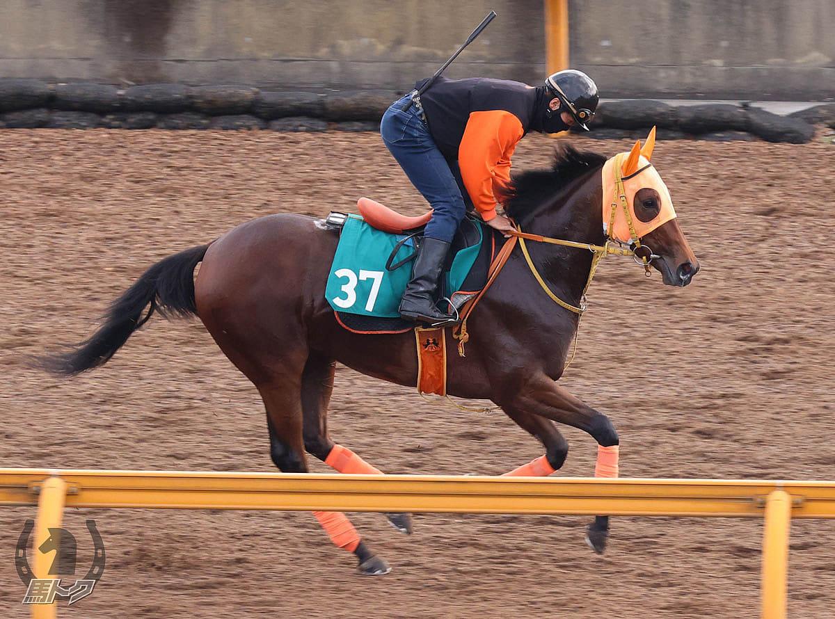 スタニングローズの馬体写真