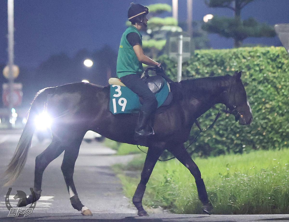 ソクラテスの馬体写真
