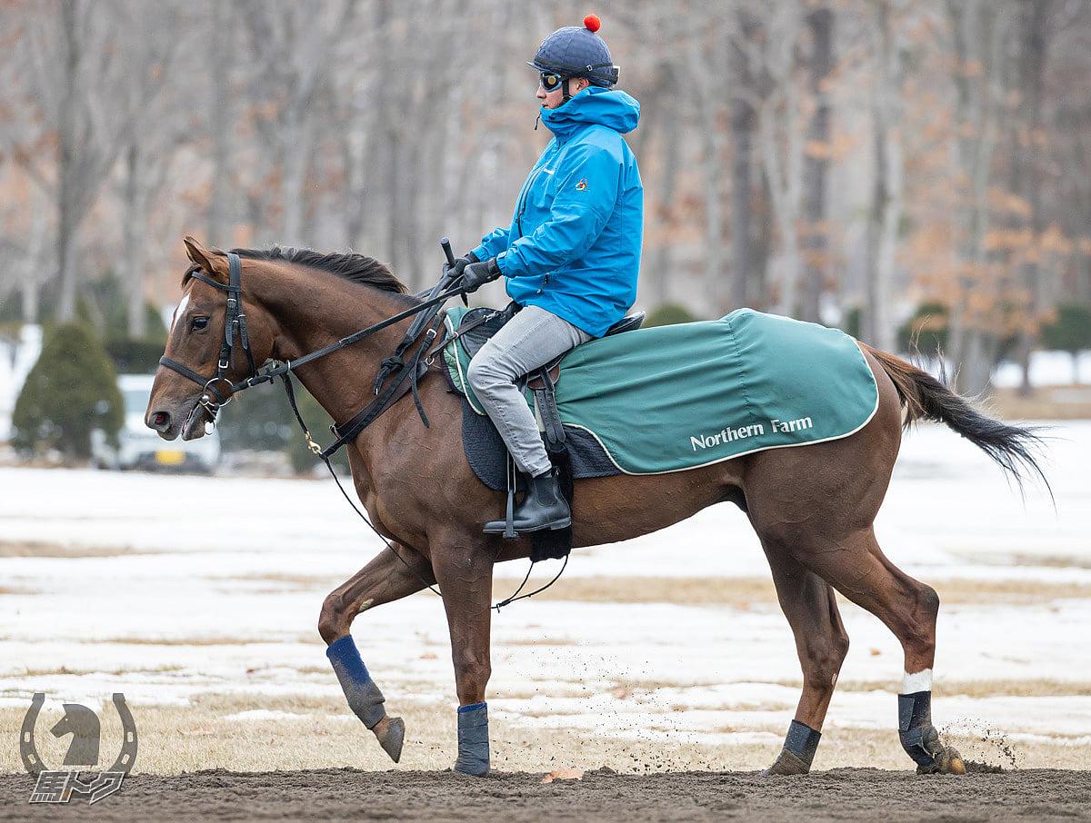 ロマンドブリエの馬体写真