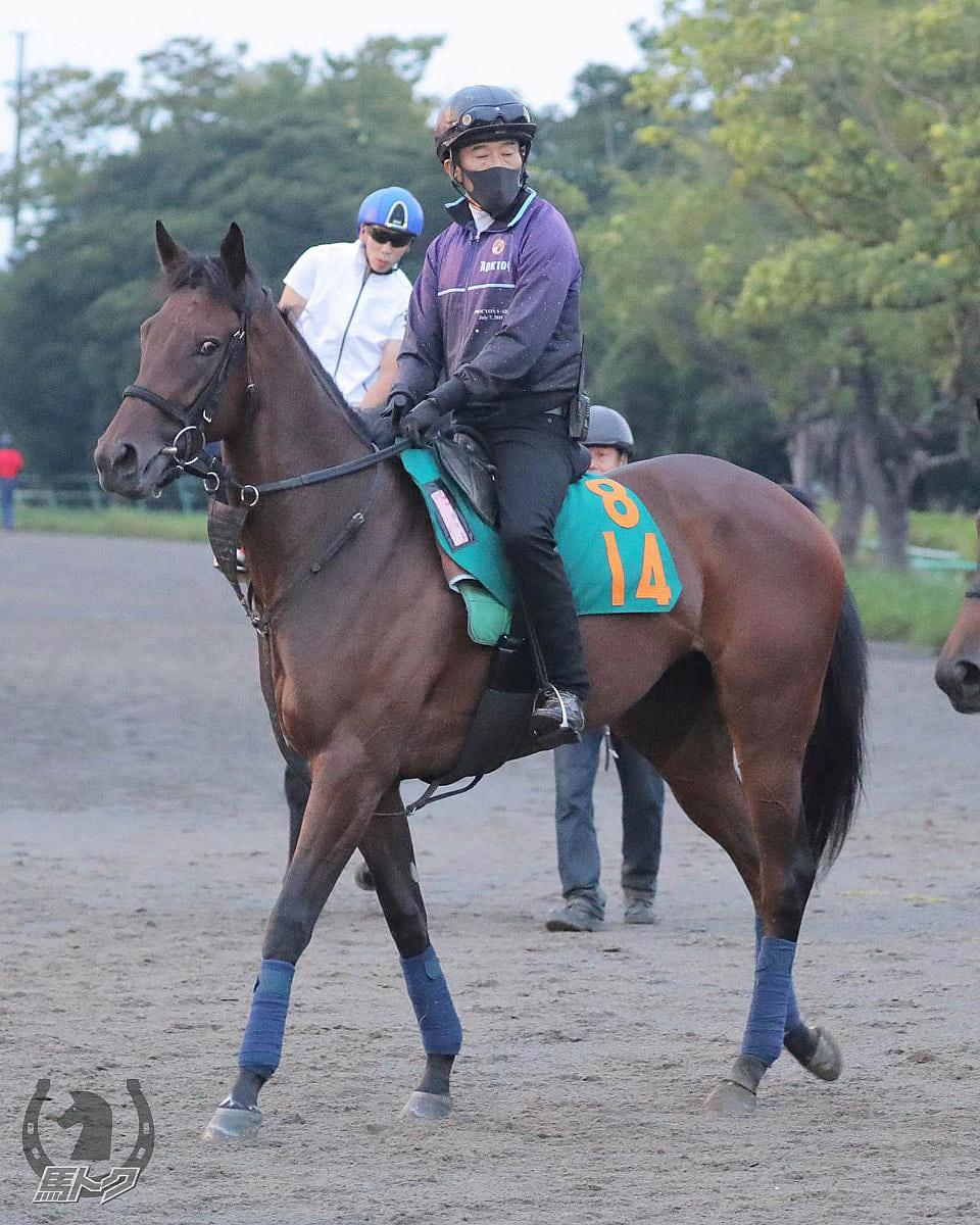 ドリームアジェンダの馬体写真