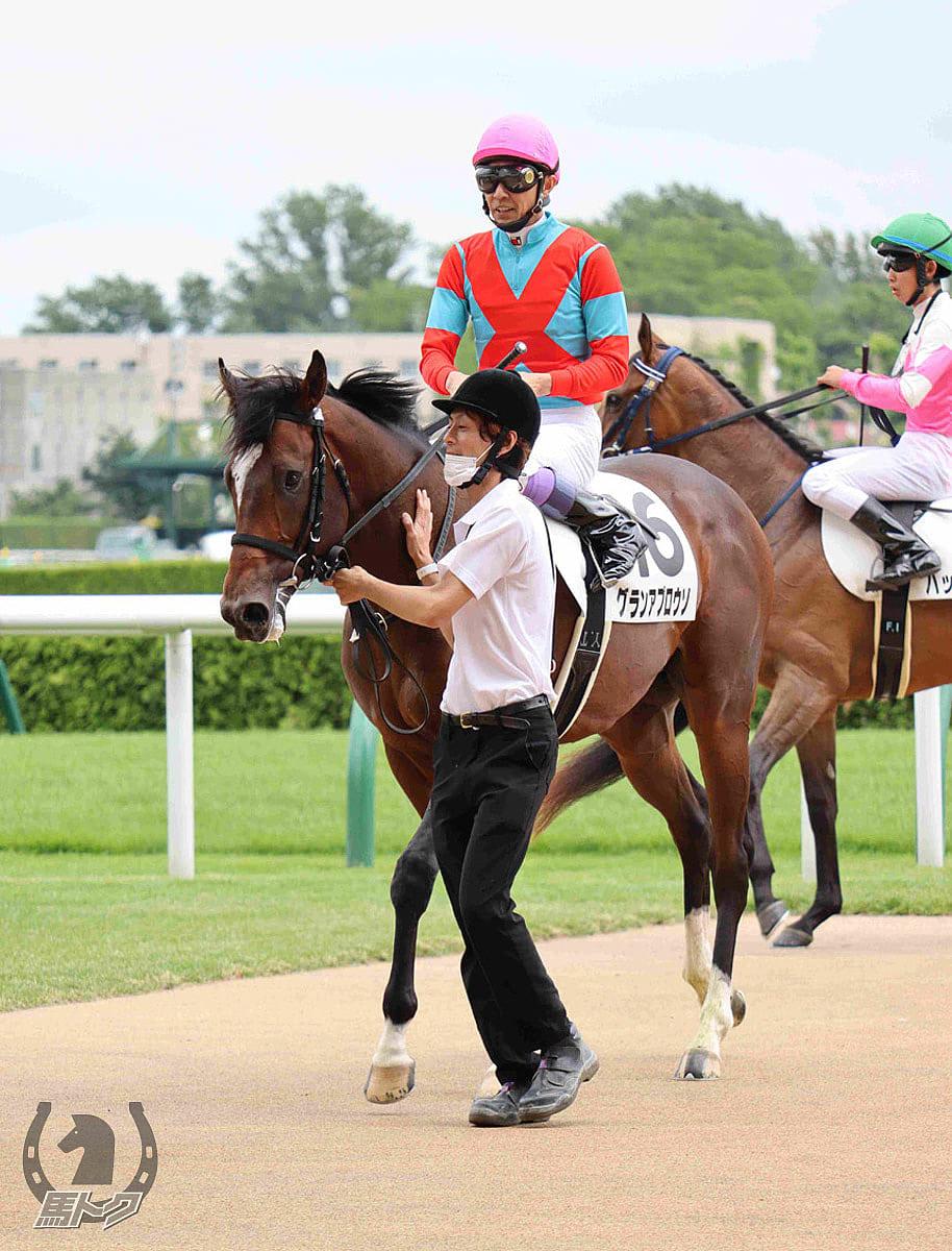 グランアプロウソの馬体写真