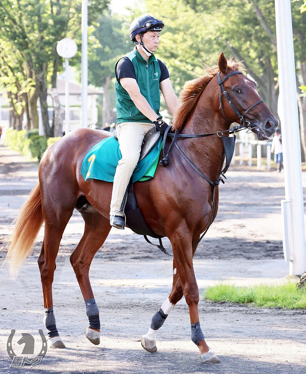 ポイズンアロウの馬体写真